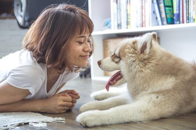 Bitiba ou comment gâter votre animal de compagnie