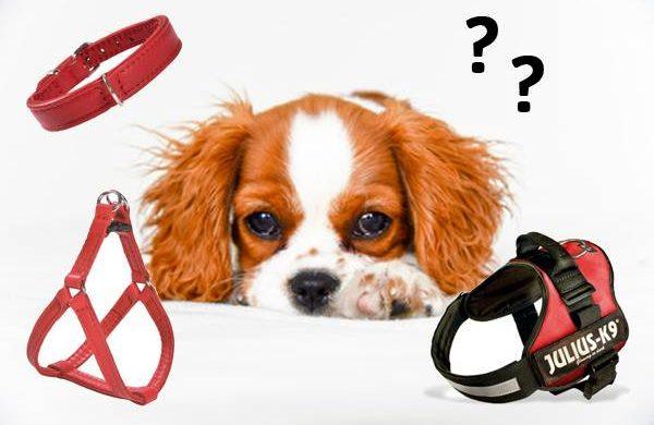 Collier et harnais pour petits chiens : comment bien choisir ?