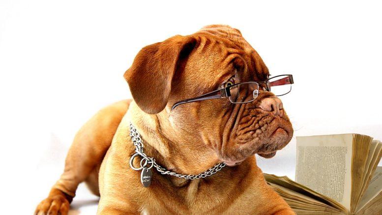 Pourquoi mettre une médaille gravée à son chien ?