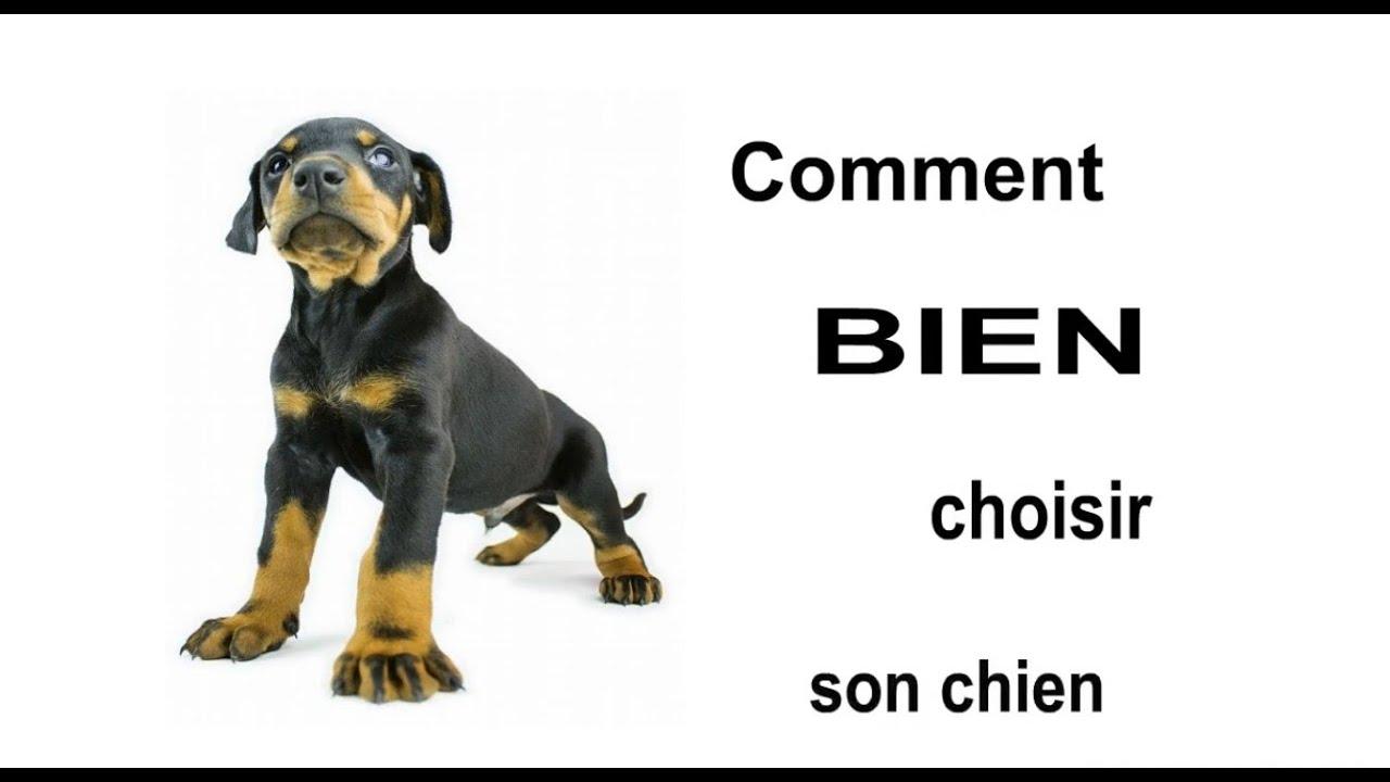 Les critères pour choisir un chien
