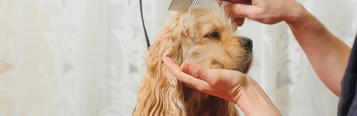 Comment entretenir le poil de son chien ?