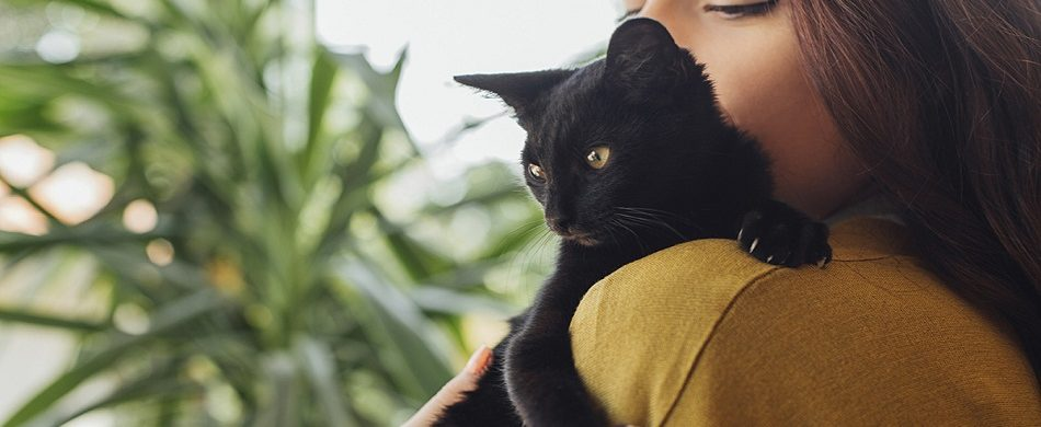 Vous recherchez comment faire une beauté à votre chat ?